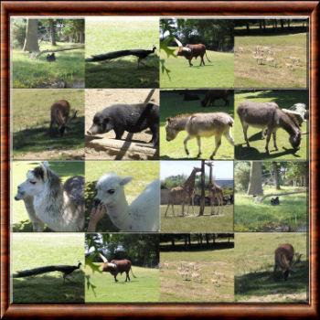 quels animaux herbivores