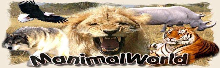 Logo Manimalworld (crédit photo : Manimalworld)