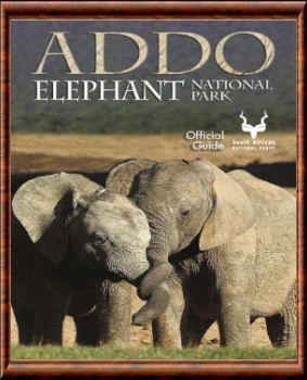 Addo Elephant guide officiel