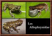 Allophrynidae
