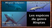 alopias.jpg