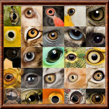 Types d'oeil animal