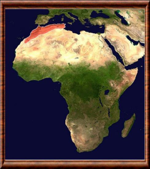 H P Reptiles Atlas (massif)
