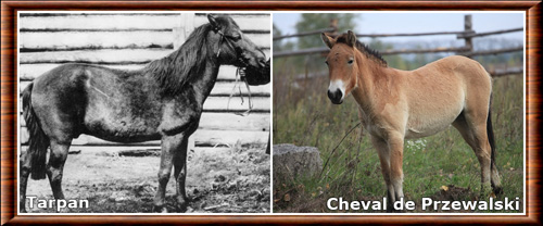 Cheval 05