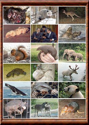 la faune image
