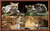 leopardus.jpg