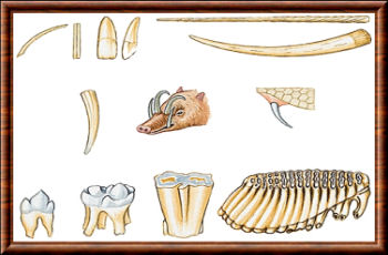 Dentition de mammifères