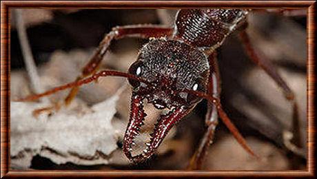 H P Reptiles Mandibule