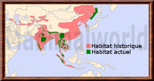 panther habitat map with Tigre on Czarna Pantera Mity I Fakty in addition  besides Facts About Snow Leopards furthermore Black Panther Uncategorized Presentation ZIxJfKU8a0 together with Endangered Animals Panther.