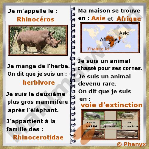 Favorit Rhinocerotidae JI06