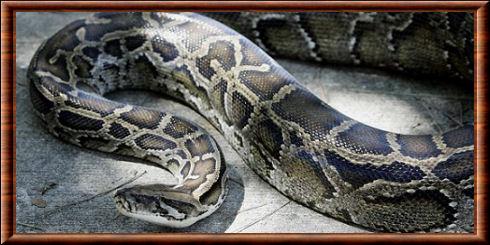 serpent. Black Bedroom Furniture Sets. Home Design Ideas