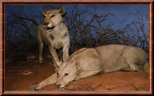 The Man Eaters Of Tsavo