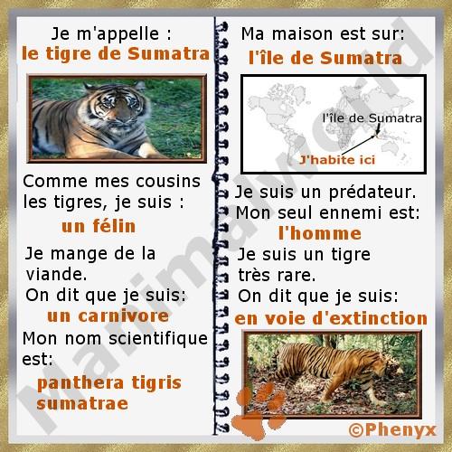 """Résultat de recherche d'images pour """"tigre de sumatra"""""""