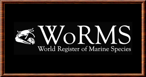 World Register of Marine Species (WoRMS)